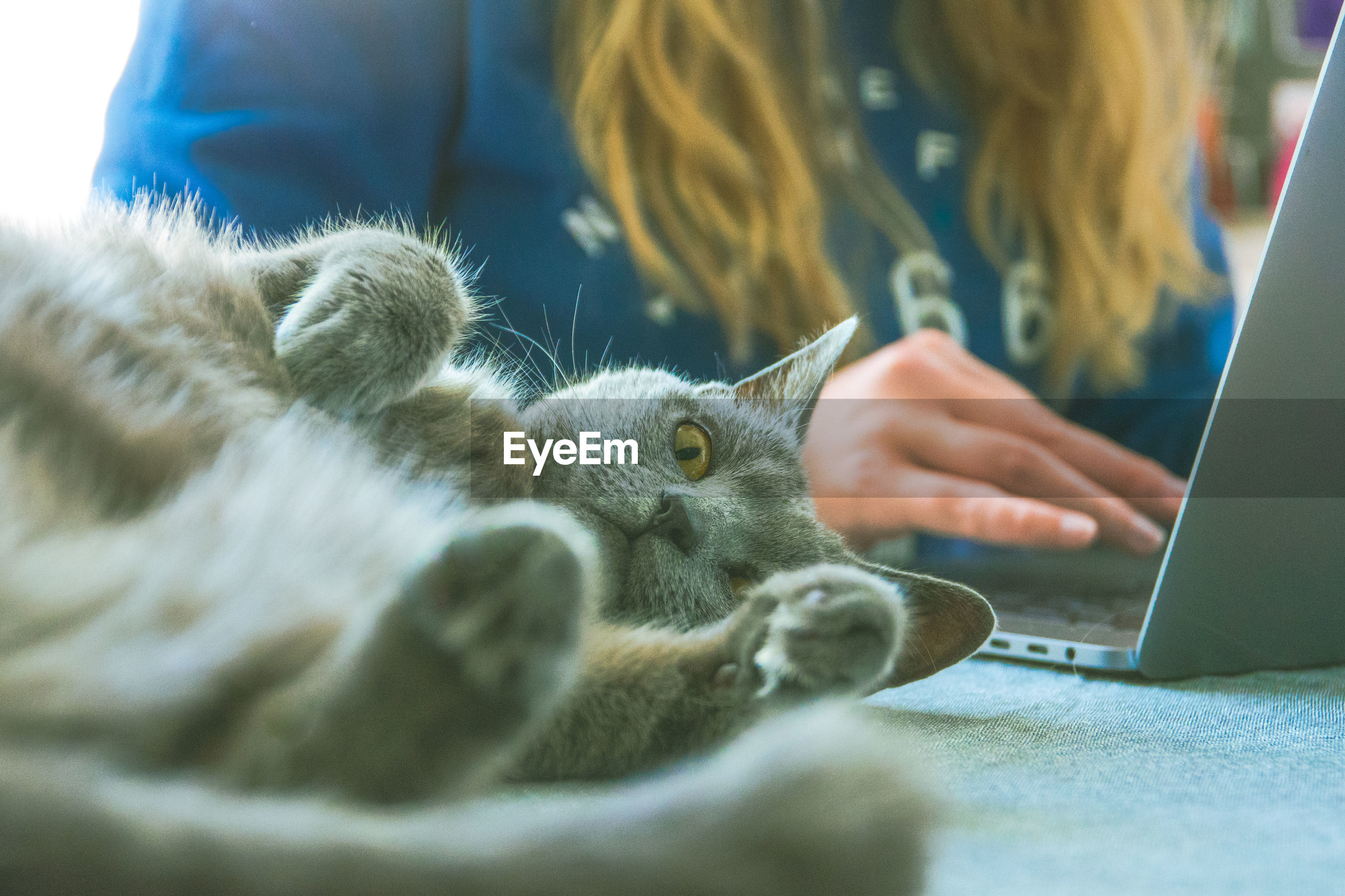 Portrait of cat lying by woman working on laptop