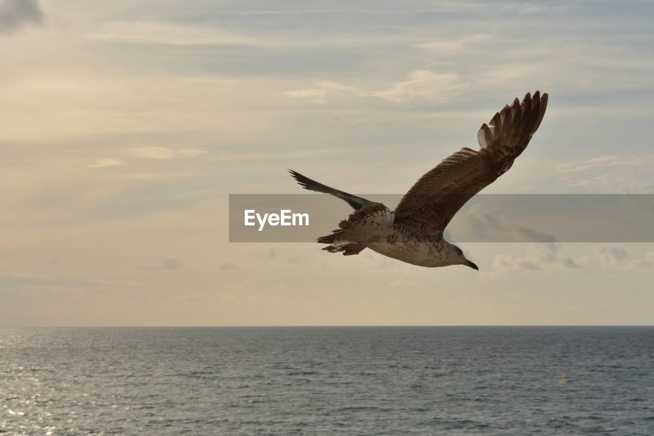 animal themes, sea, sky, animal, flying, horizon, water, horizon over water, animal wildlife, bird, vertebrate, one animal, animals in the wild, spread wings, waterfront, mid-air, cloud - sky, beauty in nature, nature, no people, outdoors, seagull, eagle, marine