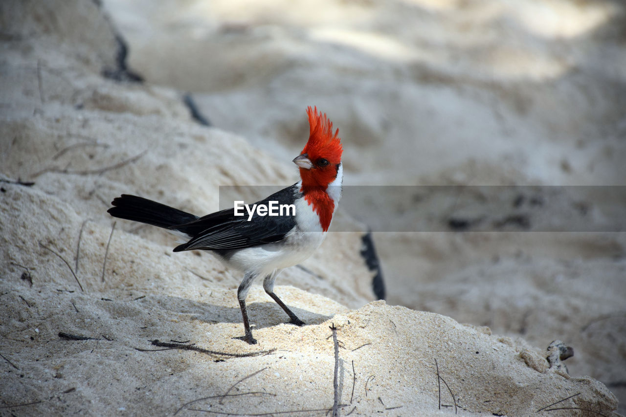 HIGH ANGLE VIEW OF A BIRD