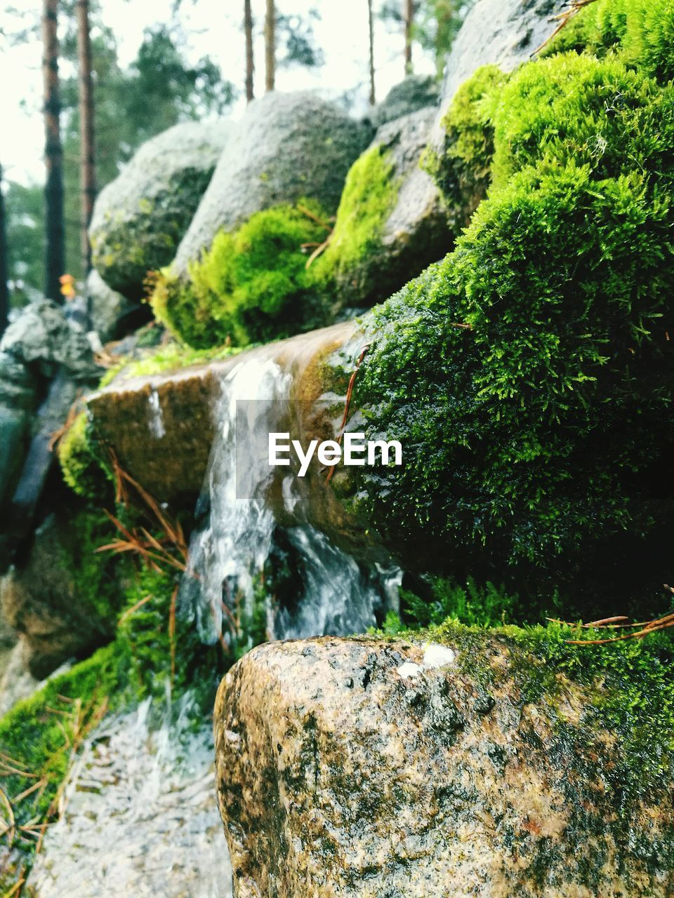 waterfall, rock - object, flowing water, water, motion, moss, nature, long exposure, day, tree, blurred motion, no people, beauty in nature, outdoors, green color, forest, scenics, close-up