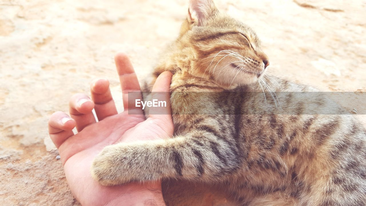mammal, one animal, pets, domestic animals, animal, domestic, animal themes, cat, domestic cat, feline, vertebrate, relaxation, human body part, human hand, close-up, hand, day, eyes closed, lying down, body part, whisker, finger, animal head