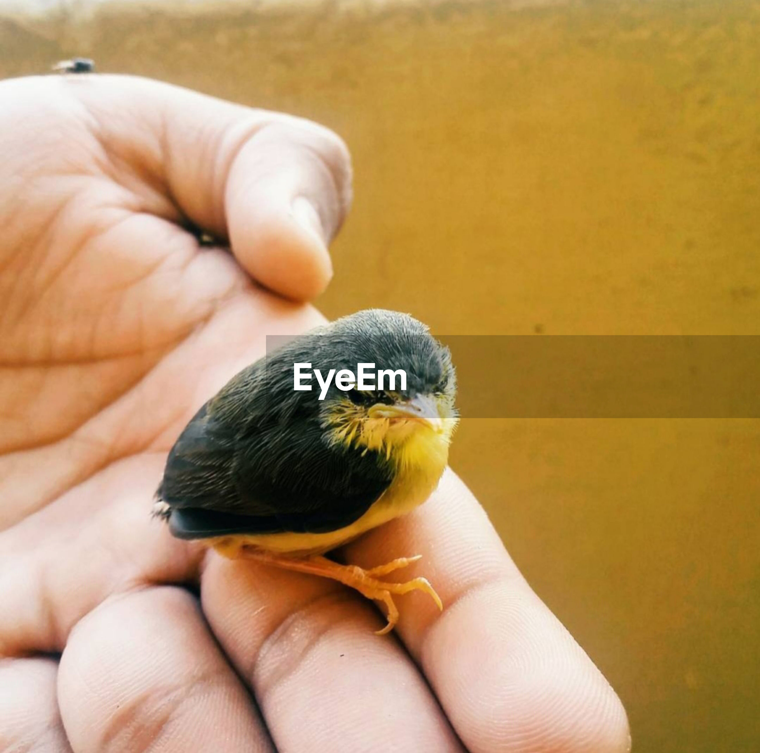 Close-up of hand holding small bird