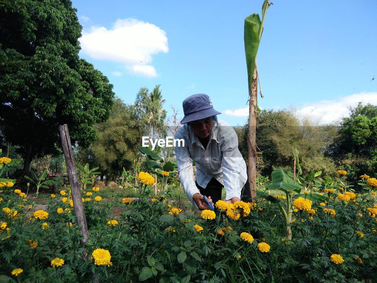 Farmer harvesting marigold on land against sky
