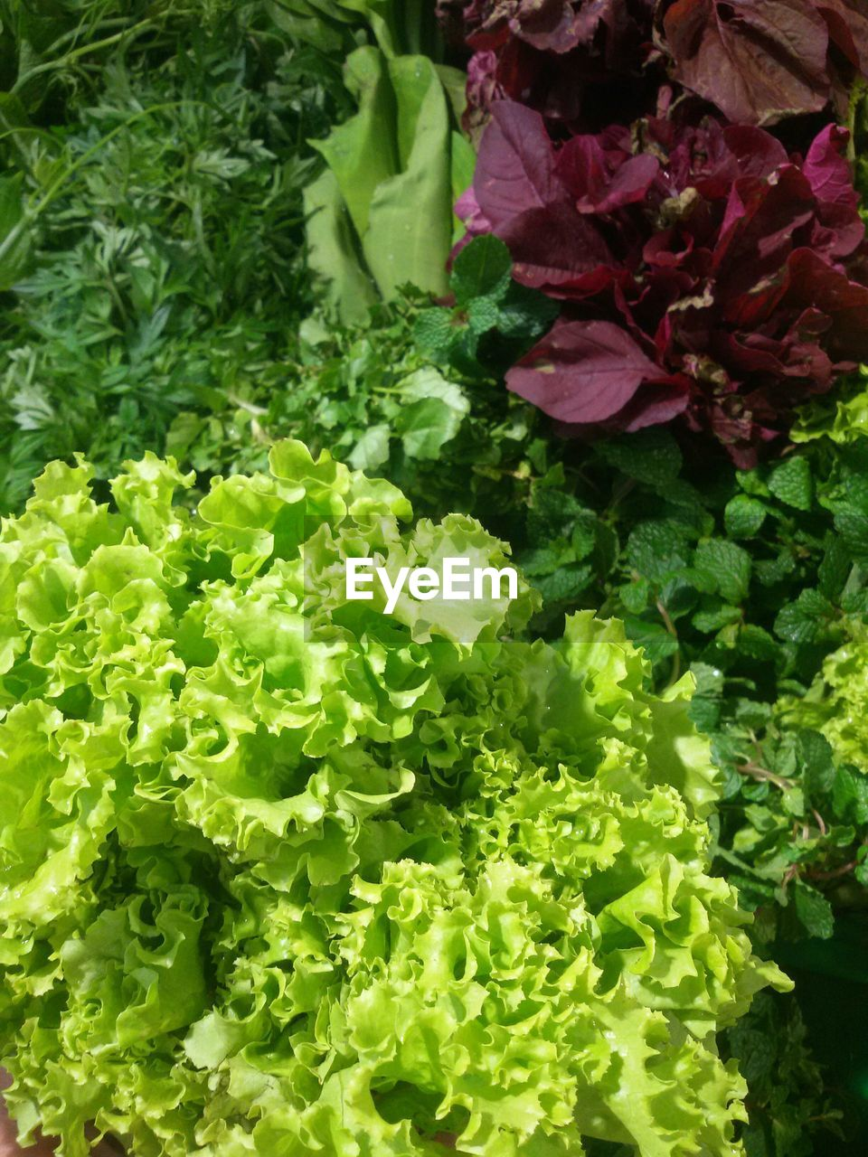 vegetable, freshness, green color, healthy eating, food and drink, food, lettuce, high angle view, no people, leaf, backgrounds, flower, growth, full frame, close-up, day, outdoors, nature, beauty in nature, fragility, flower head