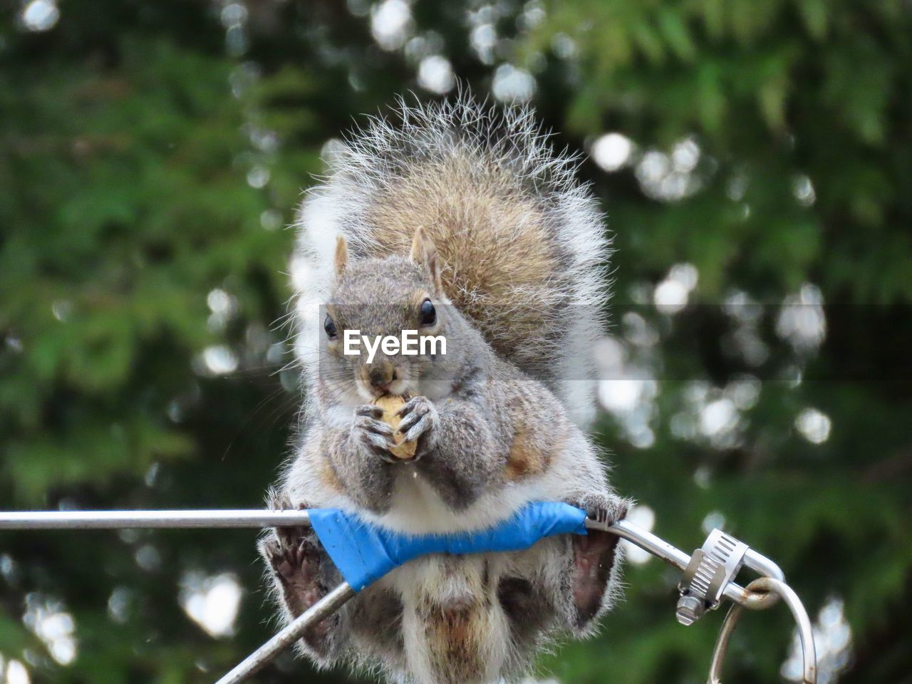 animal wildlife, focus on foreground, one animal, mammal, animals in the wild, vertebrate, holding, day, close-up, nature, plant, no people, rodent, outdoors, squirrel, front view, portrait, whisker