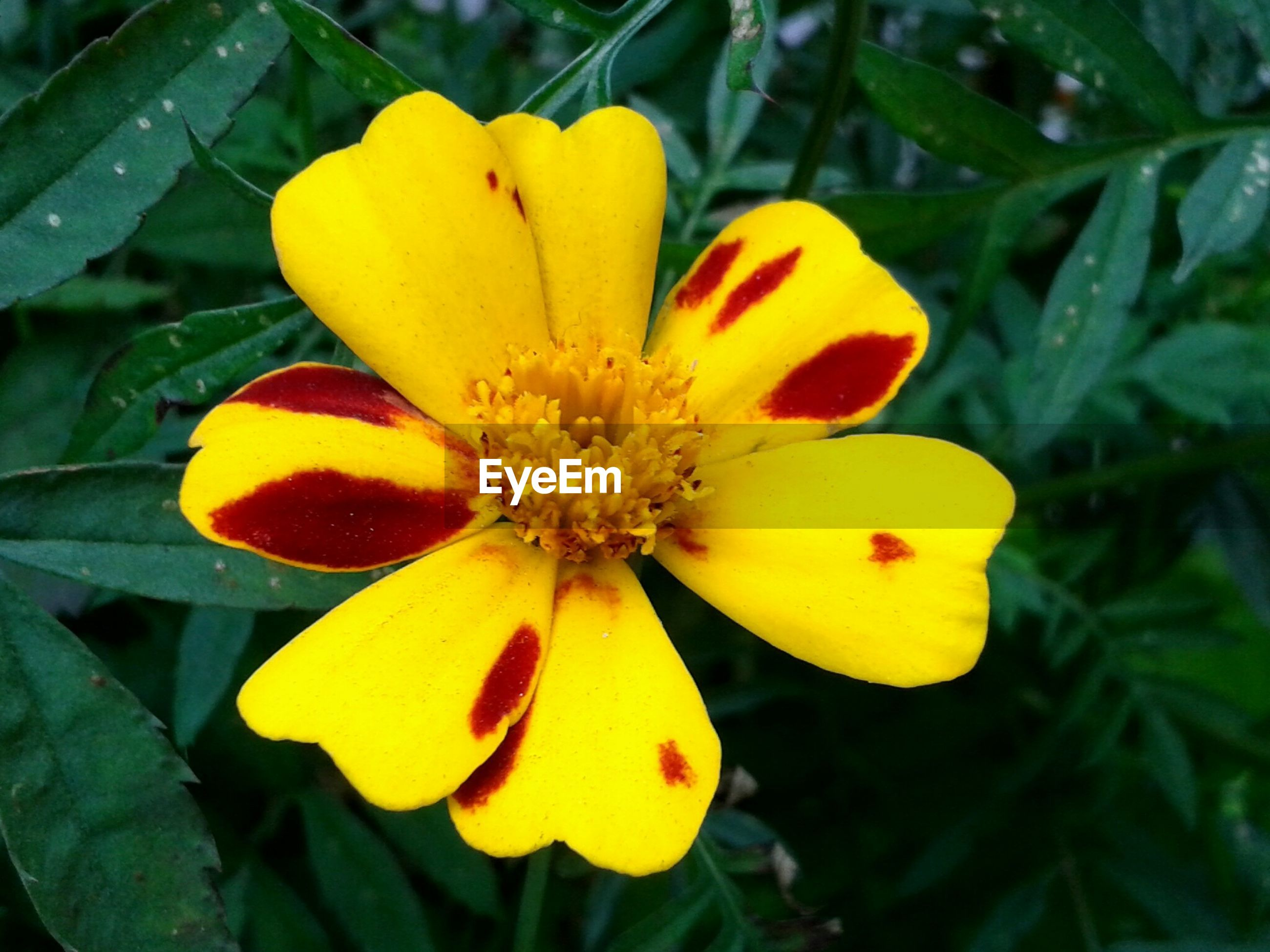 High angle view of yellow flower in bloom
