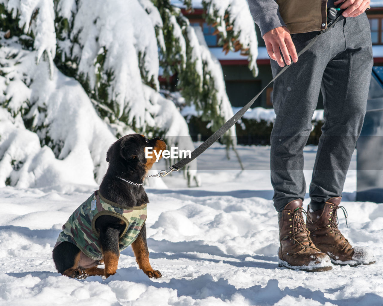 Low section of man with dog on snow field