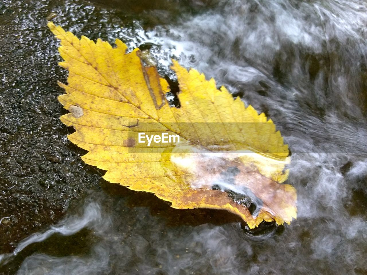 leaf, autumn, change, nature, yellow, water, beauty in nature, outdoors, day, no people, scenics, tree, maple, purity, landscape, close-up, fragility