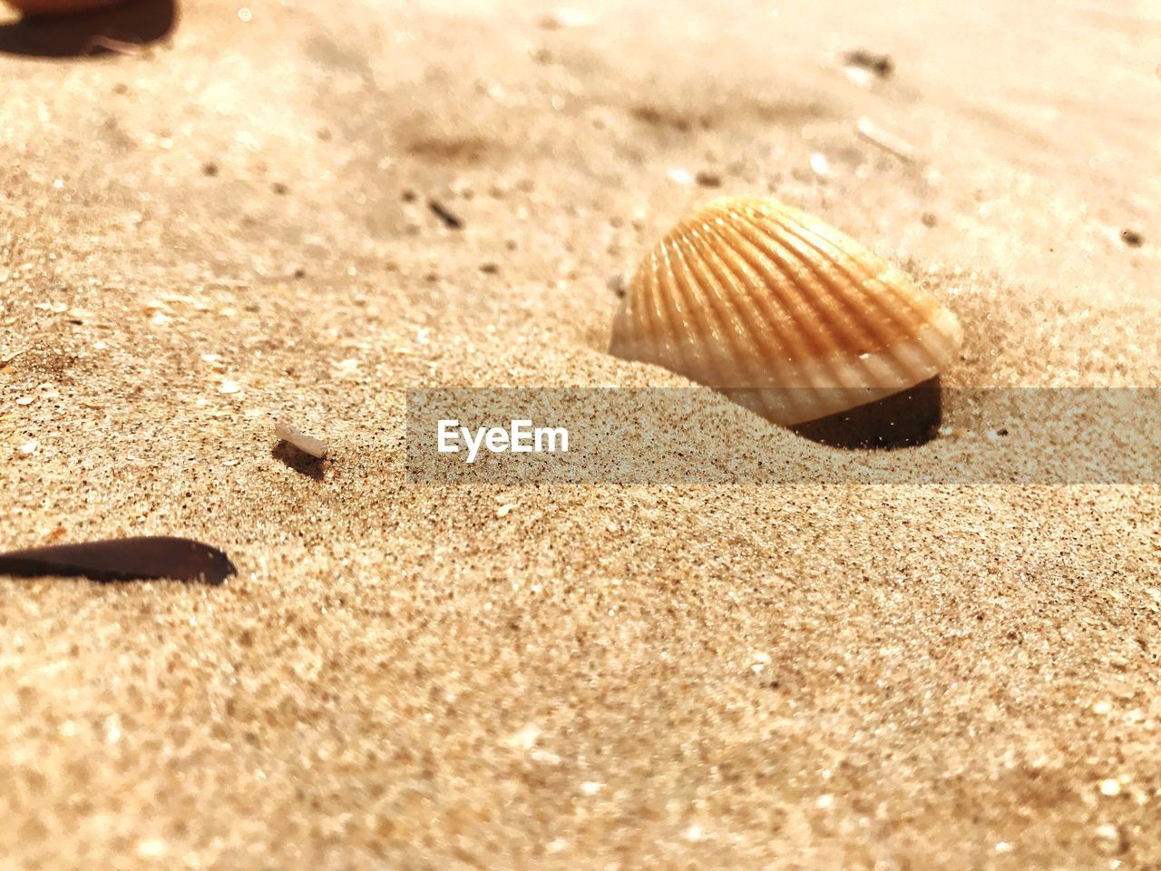 animal wildlife, shell, sand, animal, sunlight, animals in the wild, land, selective focus, day, close-up, beach, nature, animal shell, one animal, animal themes, no people, seashell, beauty in nature, natural pattern, pattern, outdoors, surface level, marine