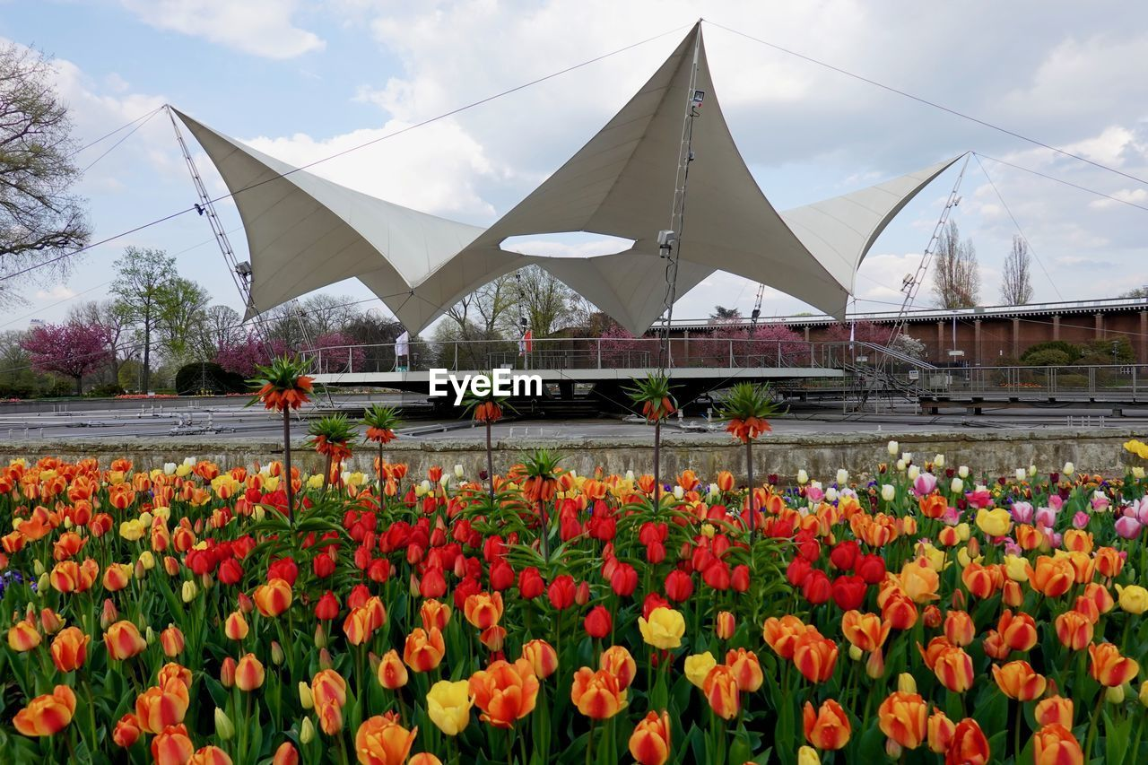 flower, flowering plant, plant, nature, architecture, sky, beauty in nature, growth, vulnerability, freshness, fragility, day, built structure, building exterior, cloud - sky, tulip, flowerbed, multi colored, outdoors, flower head, gardening