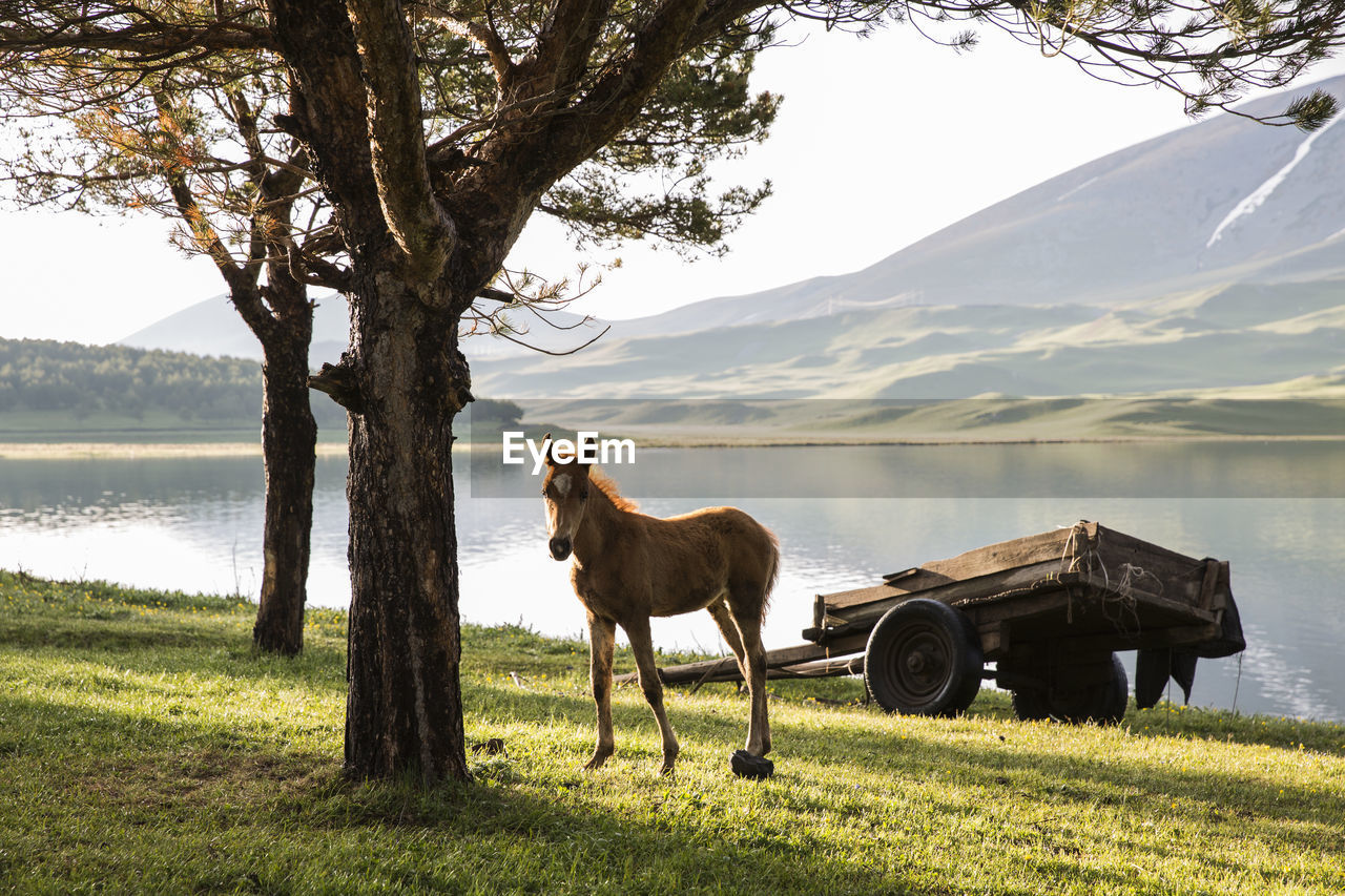 Horse Standing On Field By Lake Against Sky