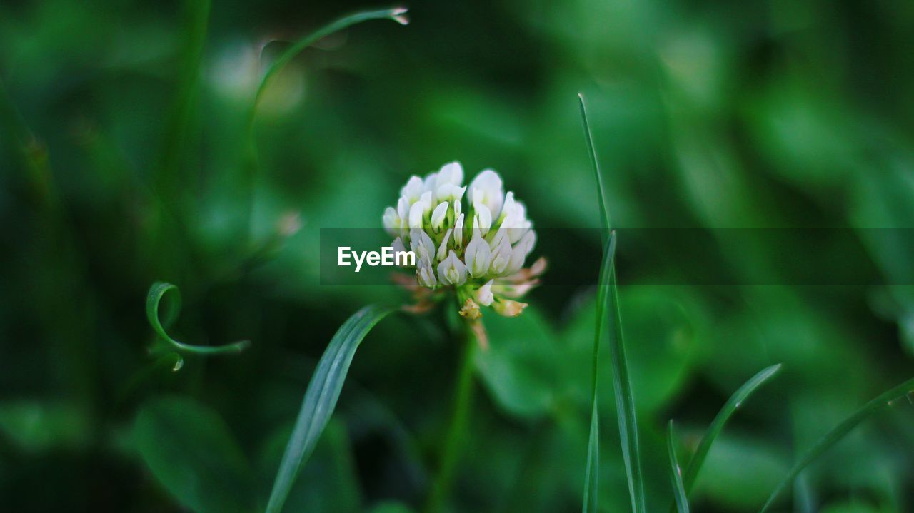 flower, flowering plant, plant, freshness, fragility, beauty in nature, growth, vulnerability, close-up, petal, selective focus, nature, day, no people, green color, flower head, inflorescence, land, focus on foreground, field