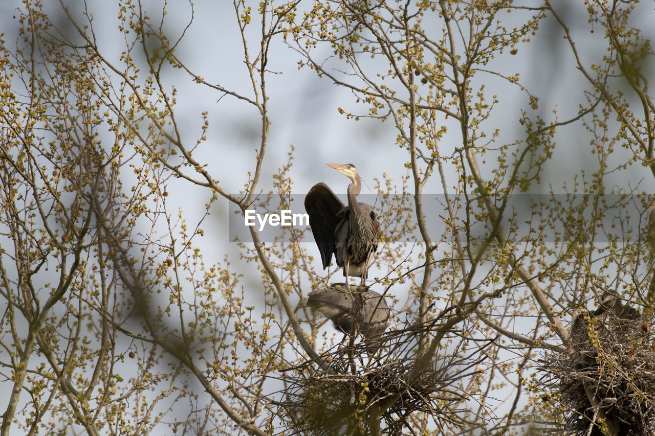 animal themes, animals in the wild, vertebrate, animal wildlife, animal, one animal, tree, bird, plant, branch, perching, nature, no people, day, outdoors, low angle view, sky, growth, focus on foreground, beauty in nature, eagle