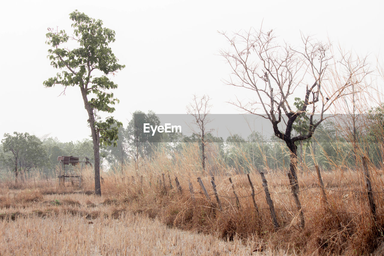 tree, plant, land, field, landscape, nature, sky, day, no people, environment, tranquility, non-urban scene, grass, tranquil scene, outdoors, scenics - nature, clear sky, bare tree, growth, remote