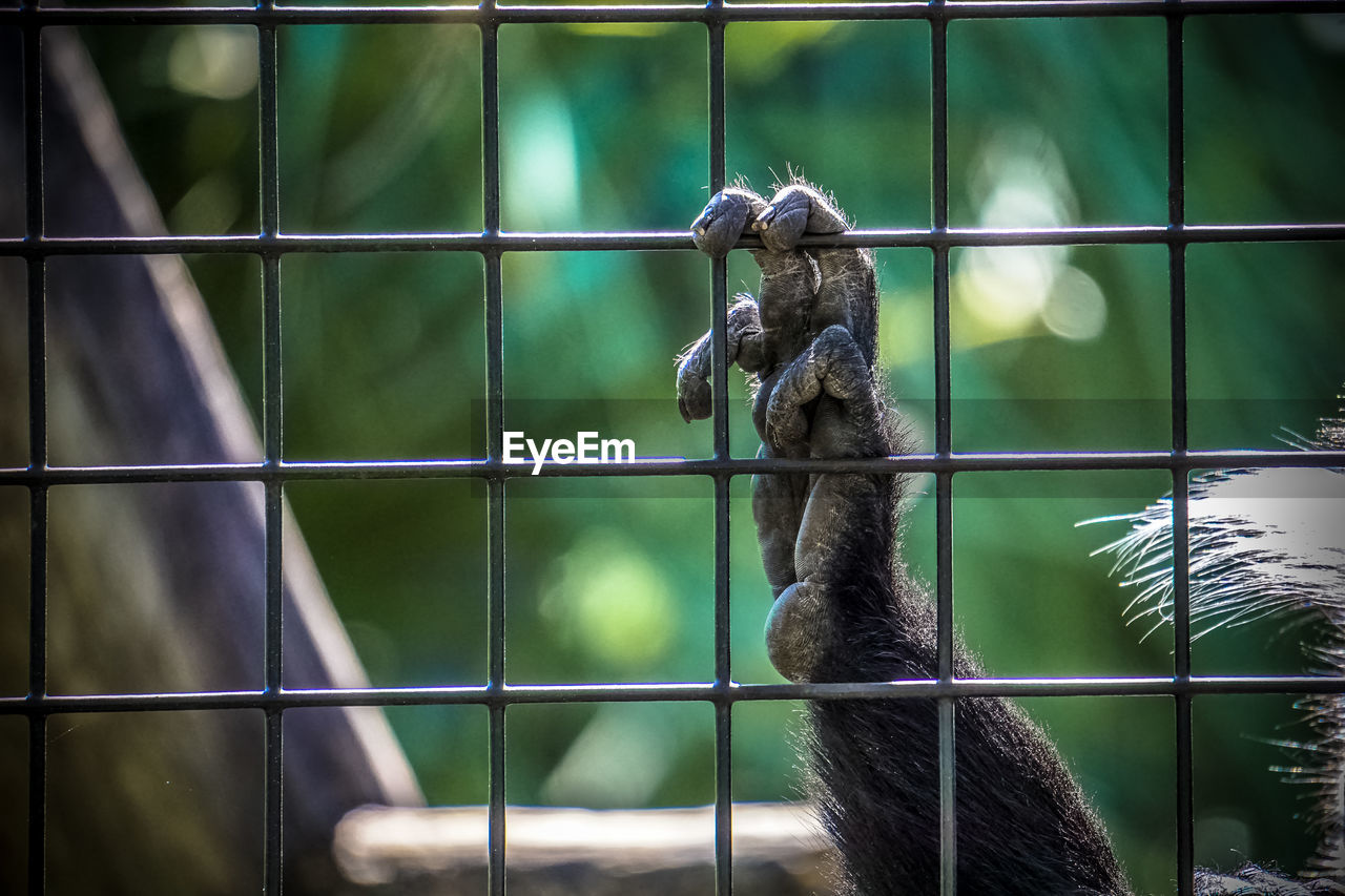Detail shot of cropped monkey
