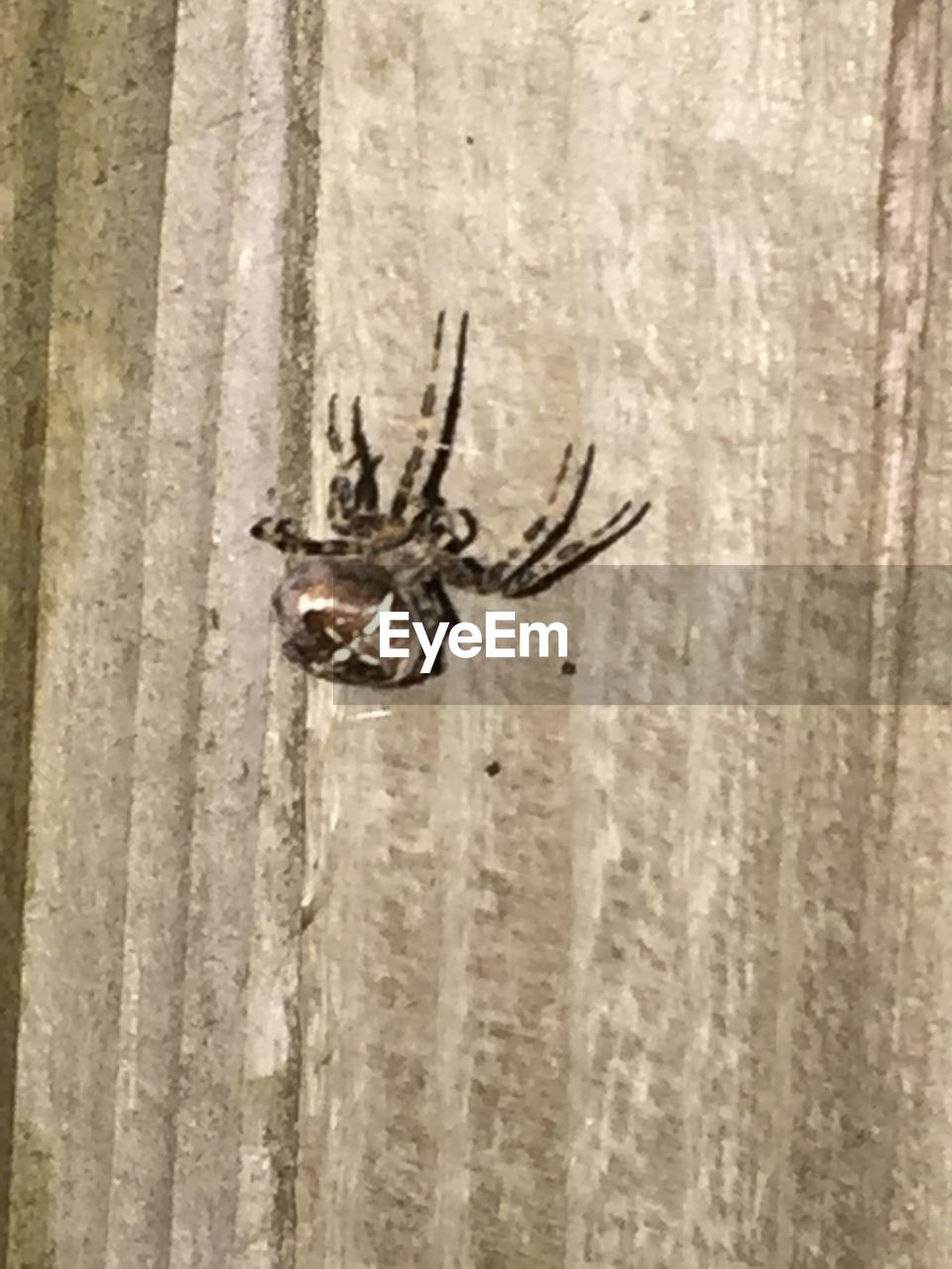 animal themes, one animal, insect, spider, animals in the wild, no people, close-up, day, animal wildlife, outdoors, nature