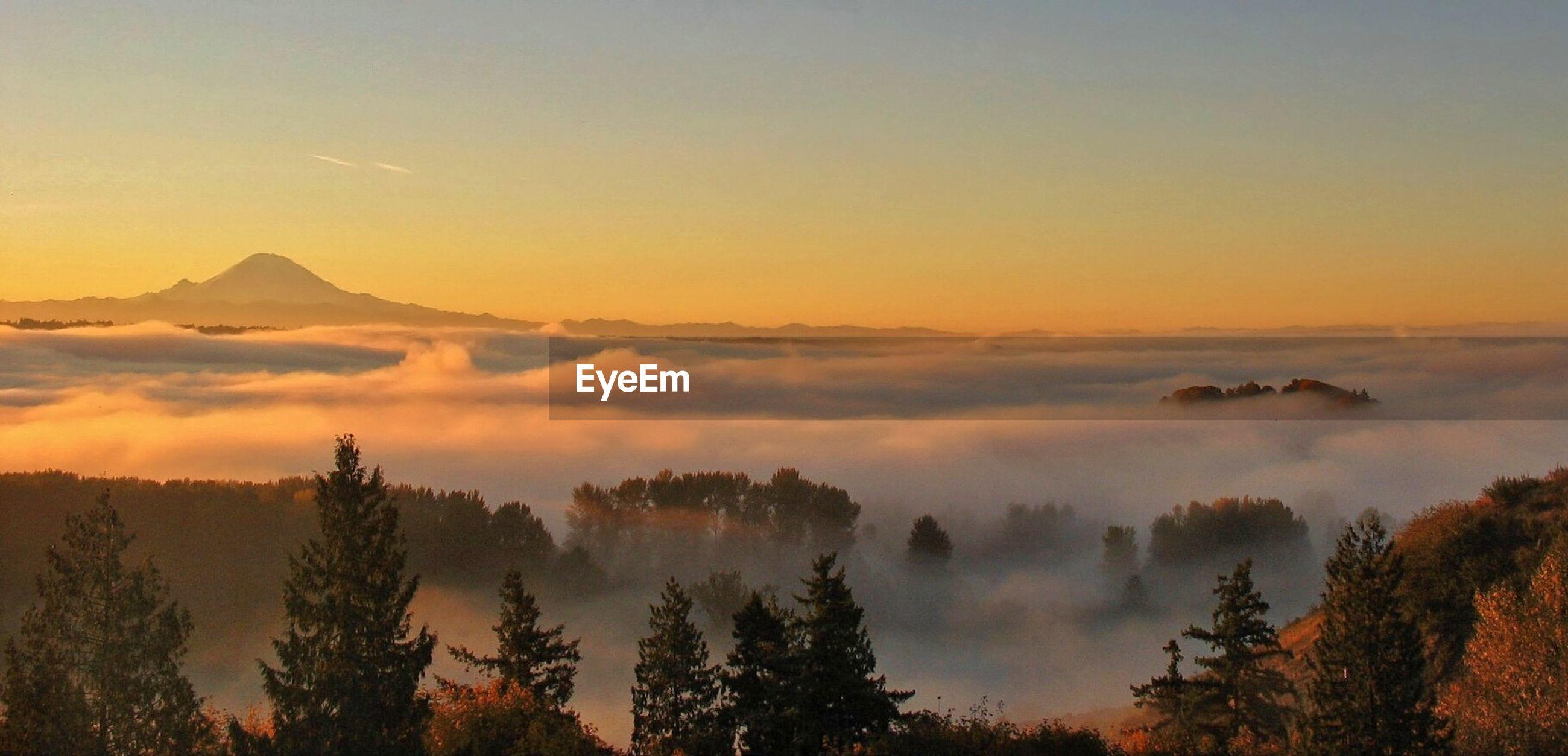 Foggy valley at dawn