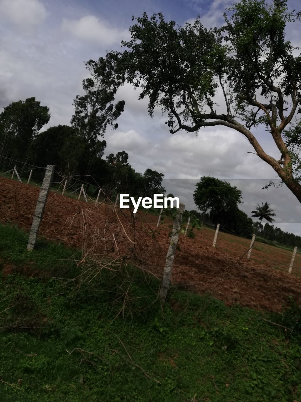 plant, tree, cloud - sky, sky, nature, grass, land, field, landscape, sport, no people, day, environment, outdoors, growth, barrier, tranquility, beauty in nature, boundary, fence
