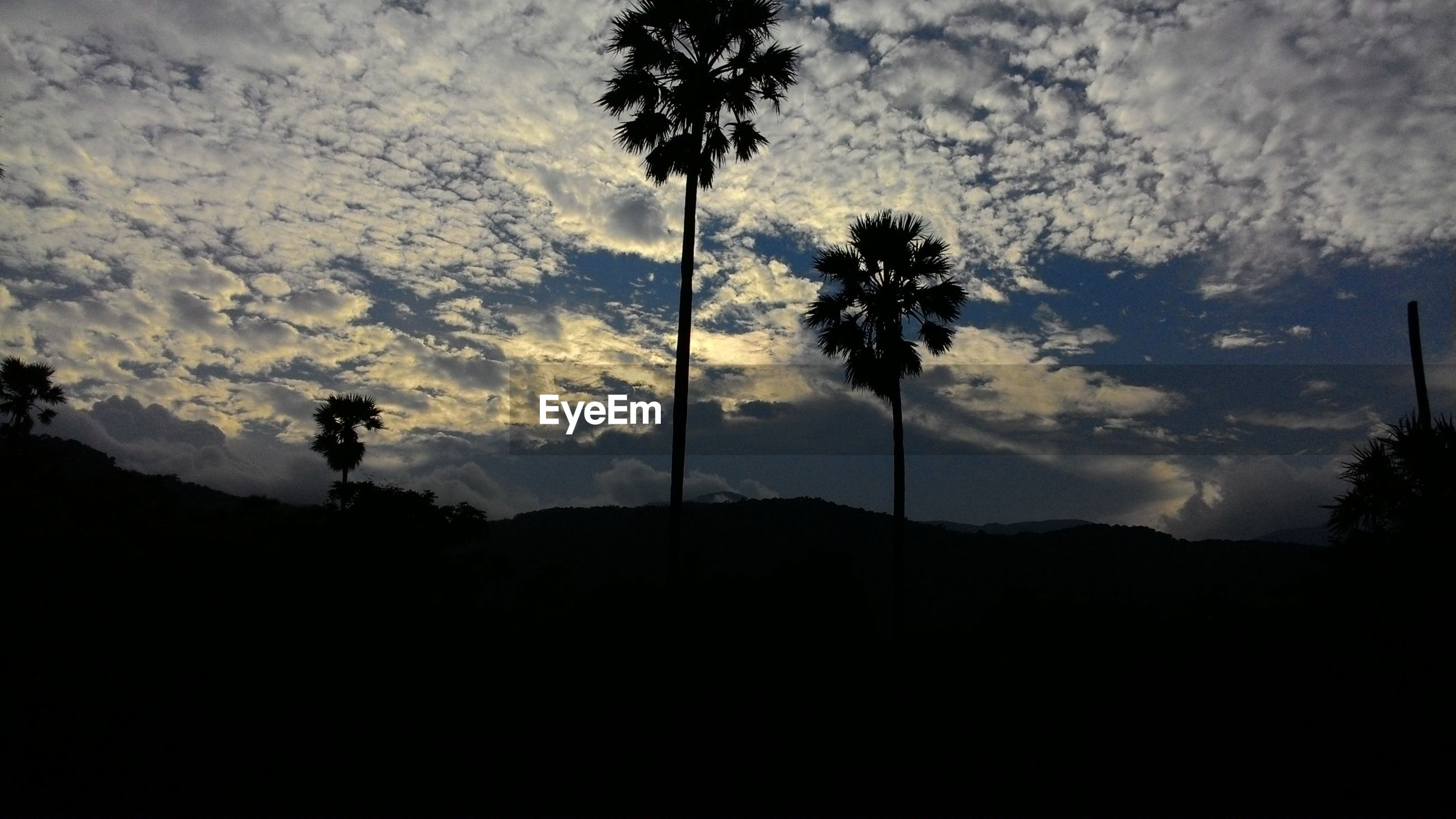 Palm trees against cloudy sky at dusk