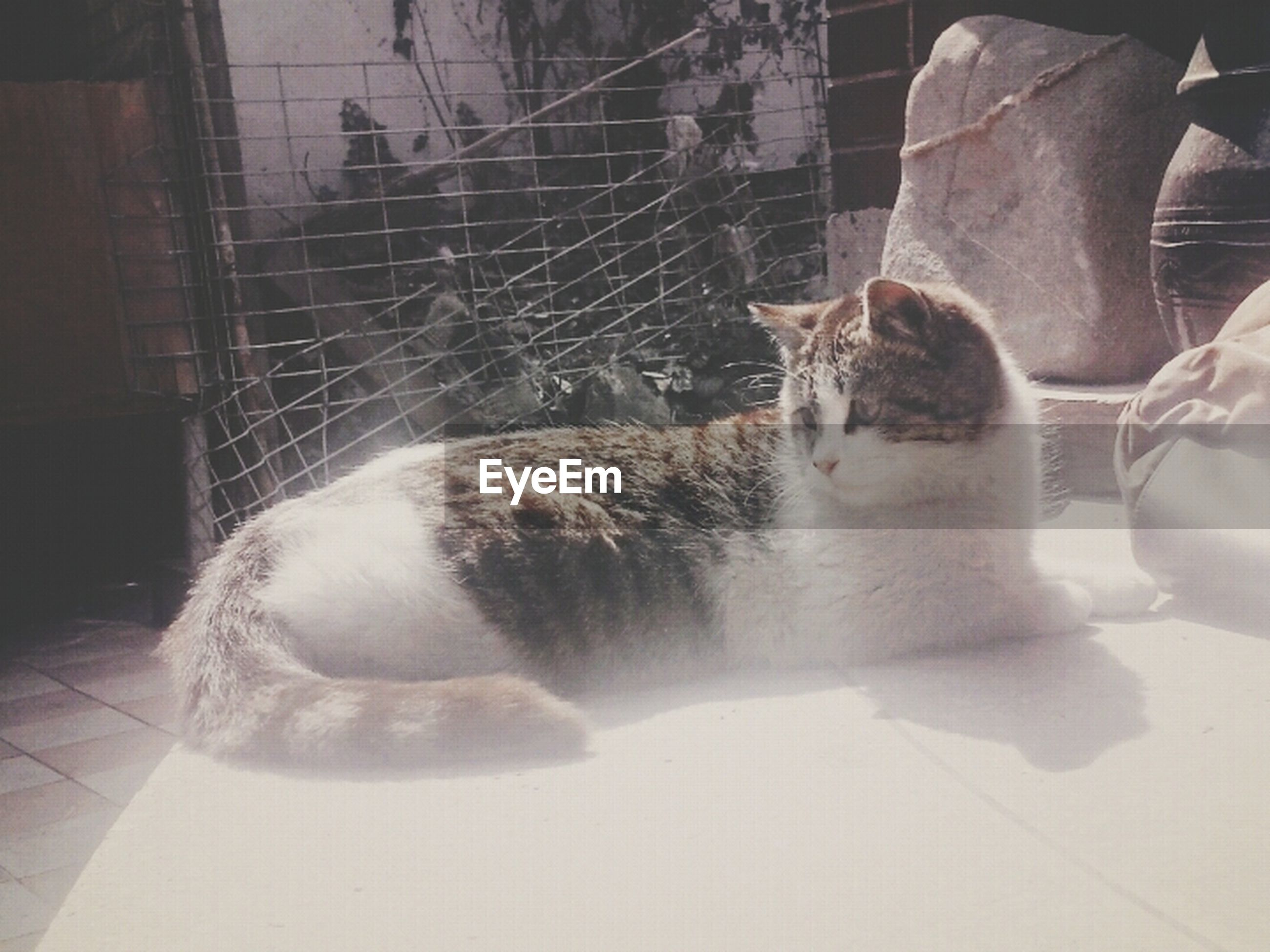 pets, animal themes, domestic animals, mammal, one animal, domestic cat, cat, feline, indoors, relaxation, dog, sitting, sunlight, lying down, whisker, resting, no people, two animals, day, carnivora