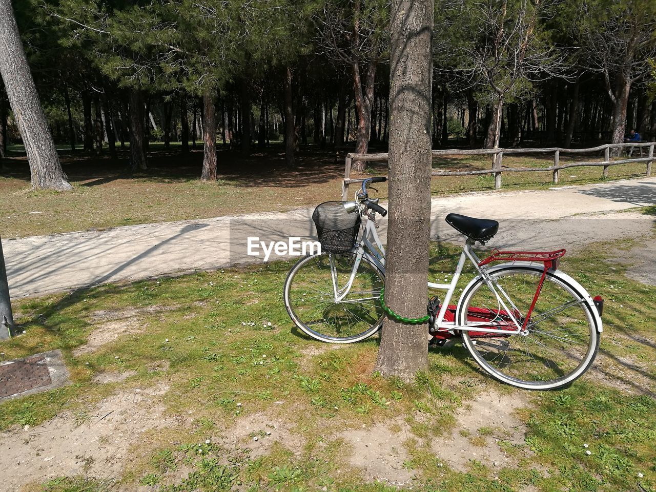 Bicycle Locked With Tree Trunk At Park
