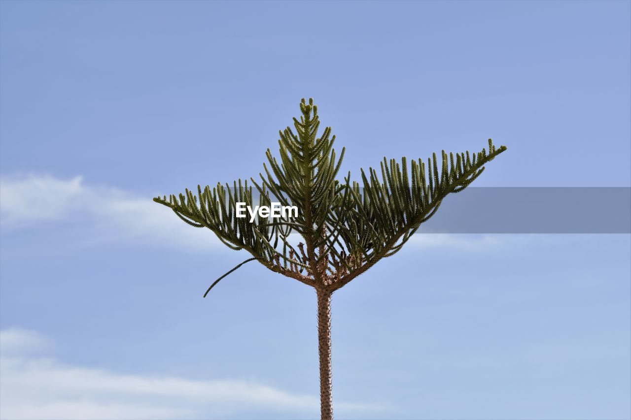 nature, sky, beauty in nature, low angle view, outdoors, blue, day, growth, cloud - sky, no people, freshness, close-up, palm tree, fragility