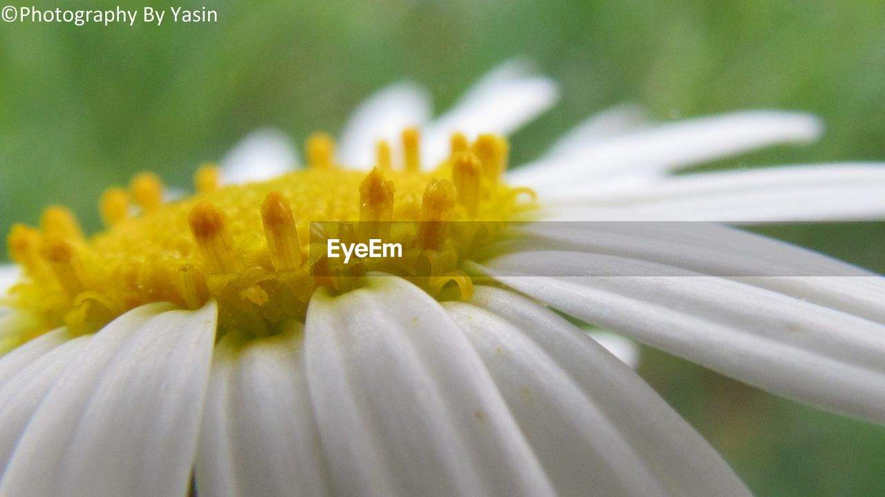 flower, petal, fragility, freshness, flower head, beauty in nature, nature, growth, yellow, close-up, day, plant, pollen, no people, outdoors, blooming, animal themes