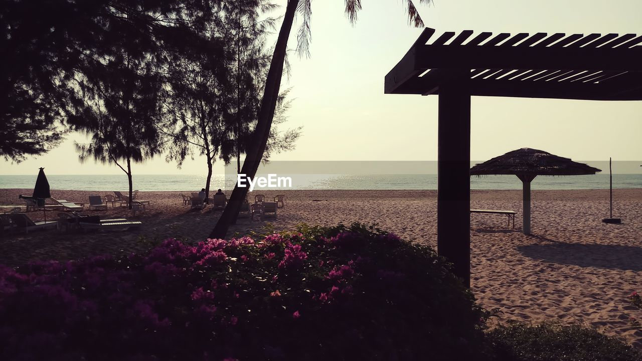 sea, water, nature, beauty in nature, beach, horizon over water, tranquility, outdoors, tree, tranquil scene, sky, scenics, no people, day, growth, sand, flower
