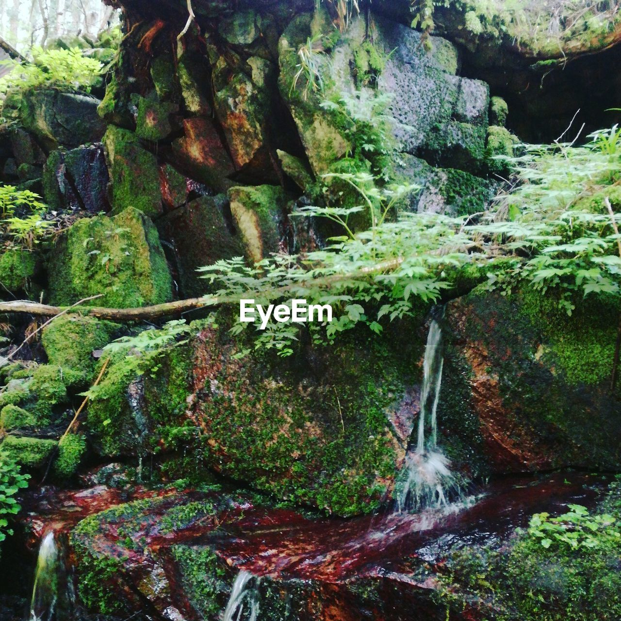 moss, plant, nature, no people, rock, water, solid, growth, beauty in nature, day, forest, rock - object, tree, green color, tranquility, waterfall, motion, land, outdoors, flowing water, flowing, rainforest