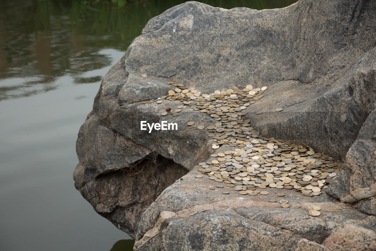 rock - object, nature, water, day, no people, beauty in nature, outdoors, close-up, animal themes