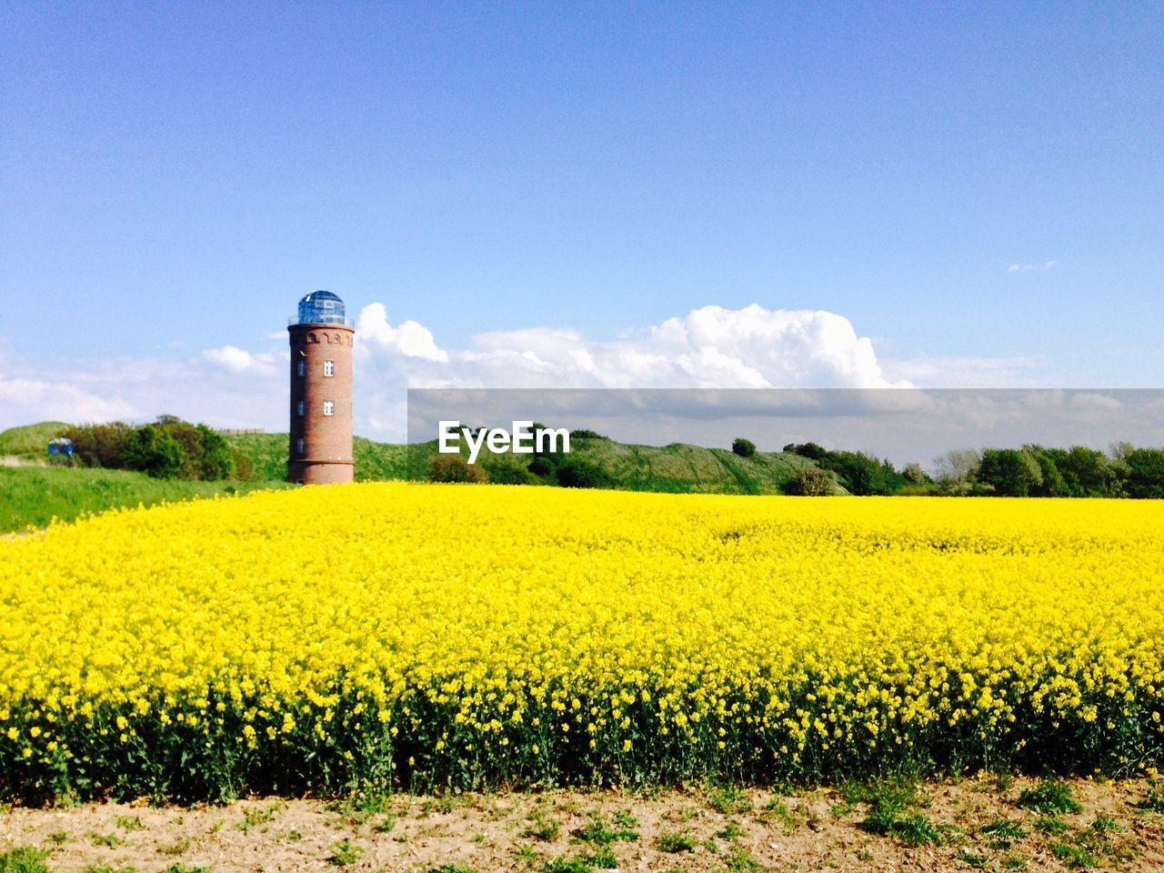 Oilseed Rape Field By Lighthouse Against Sky