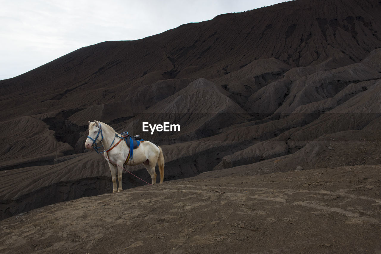 View Of Horse On Mount Bromo