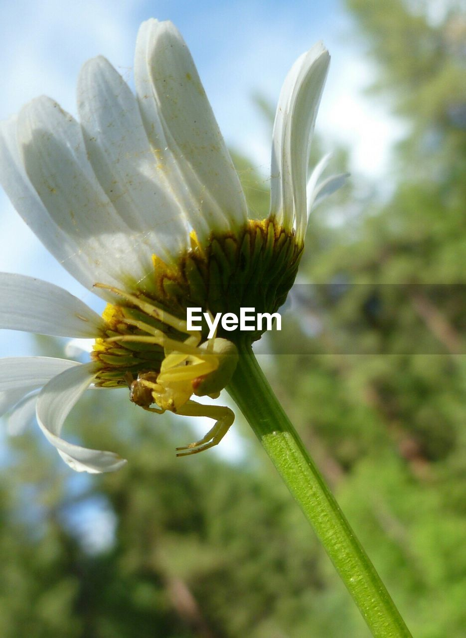flower, growth, fragility, nature, beauty in nature, plant, freshness, petal, close-up, no people, day, stamen, flower head, outdoors, springtime, blooming