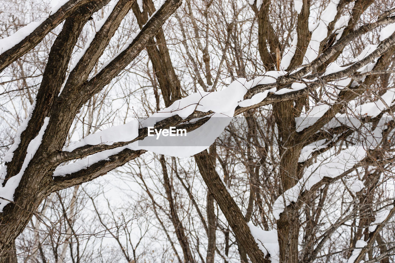tree, cold temperature, winter, snow, plant, branch, bare tree, no people, white color, trunk, tree trunk, nature, frozen, day, tranquility, low angle view, beauty in nature, land, outdoors, icicle