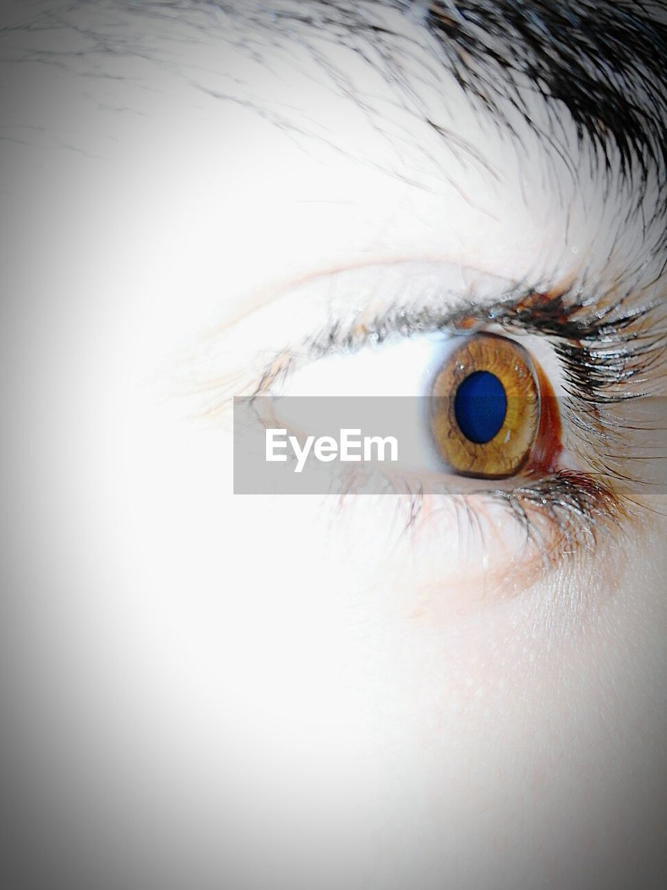 human eye, eyesight, eyeball, human body part, looking at camera, eyelash, iris - eye, eye, close-up, eyebrow, one person, portrait, sensory perception, indoors, day, people
