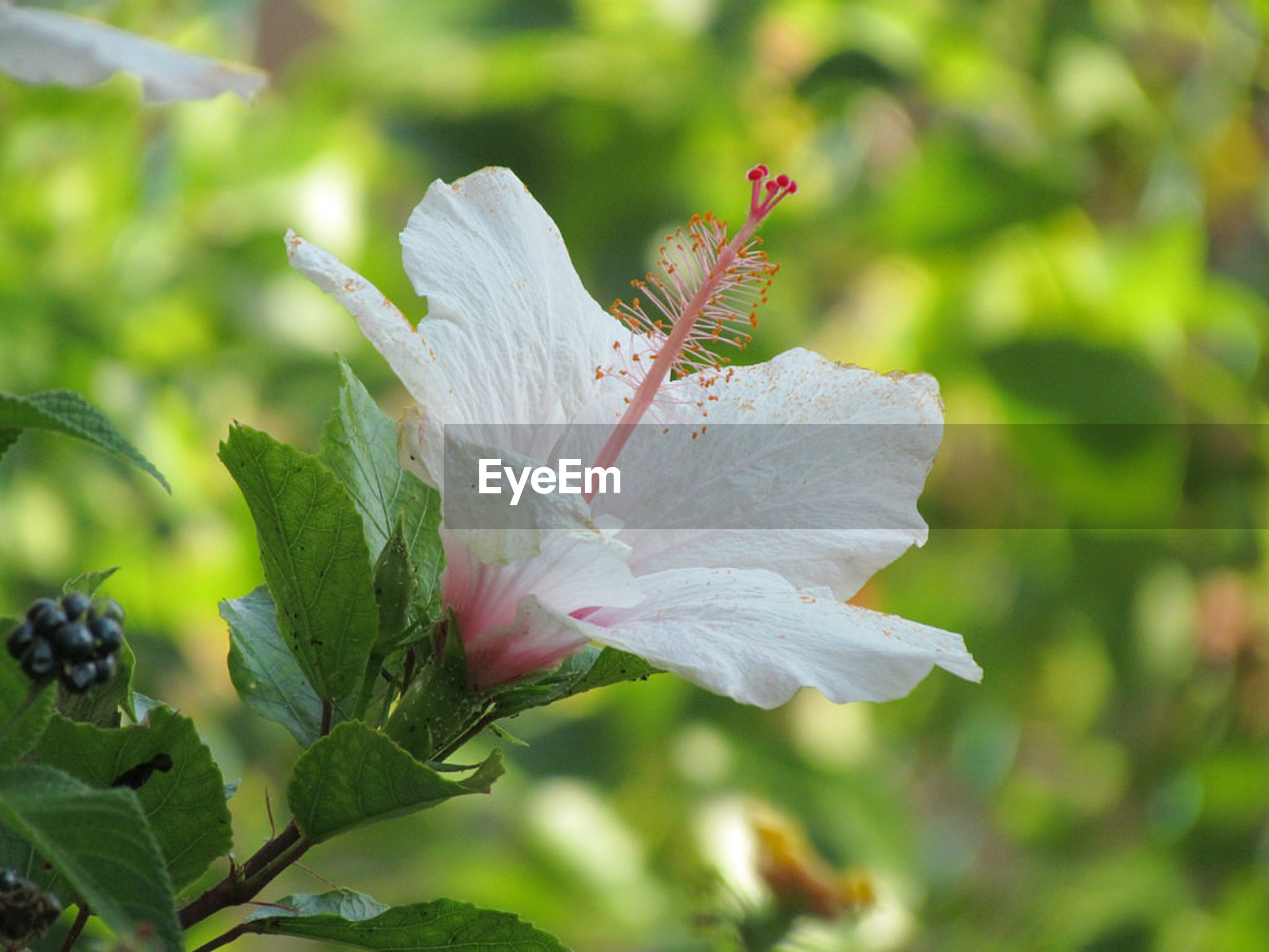 flower, plant, nature, close-up, growth, beauty in nature, petal, fragility, leaf, no people, one animal, flower head, outdoors, freshness, animal themes, insect, day, pistil