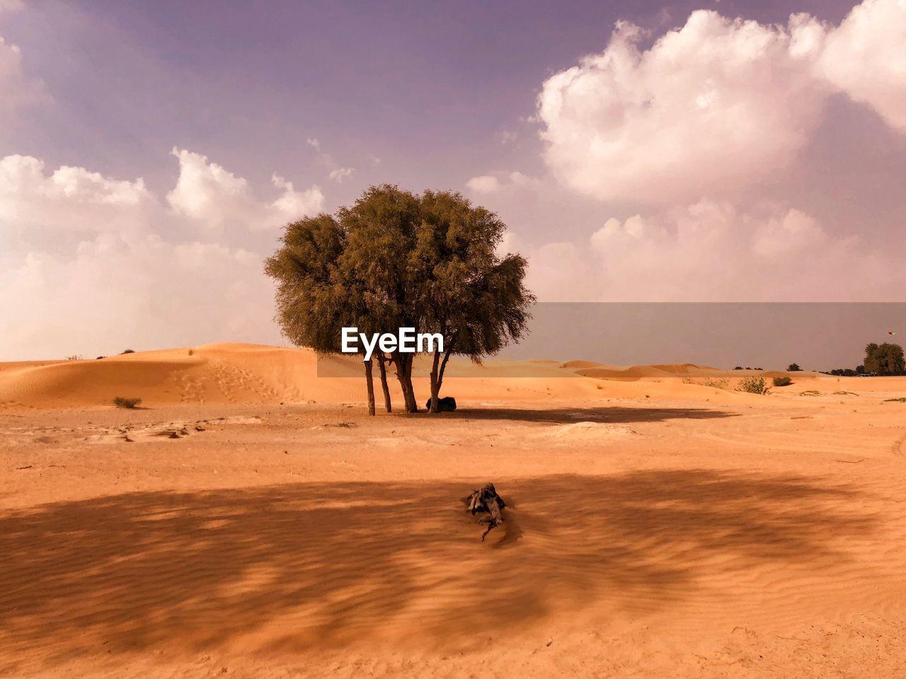 SCENIC VIEW OF TREE ON DESERT