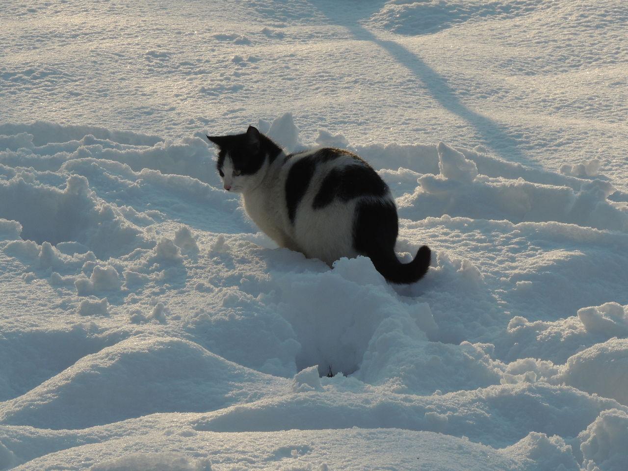 Cat On Snowy Field