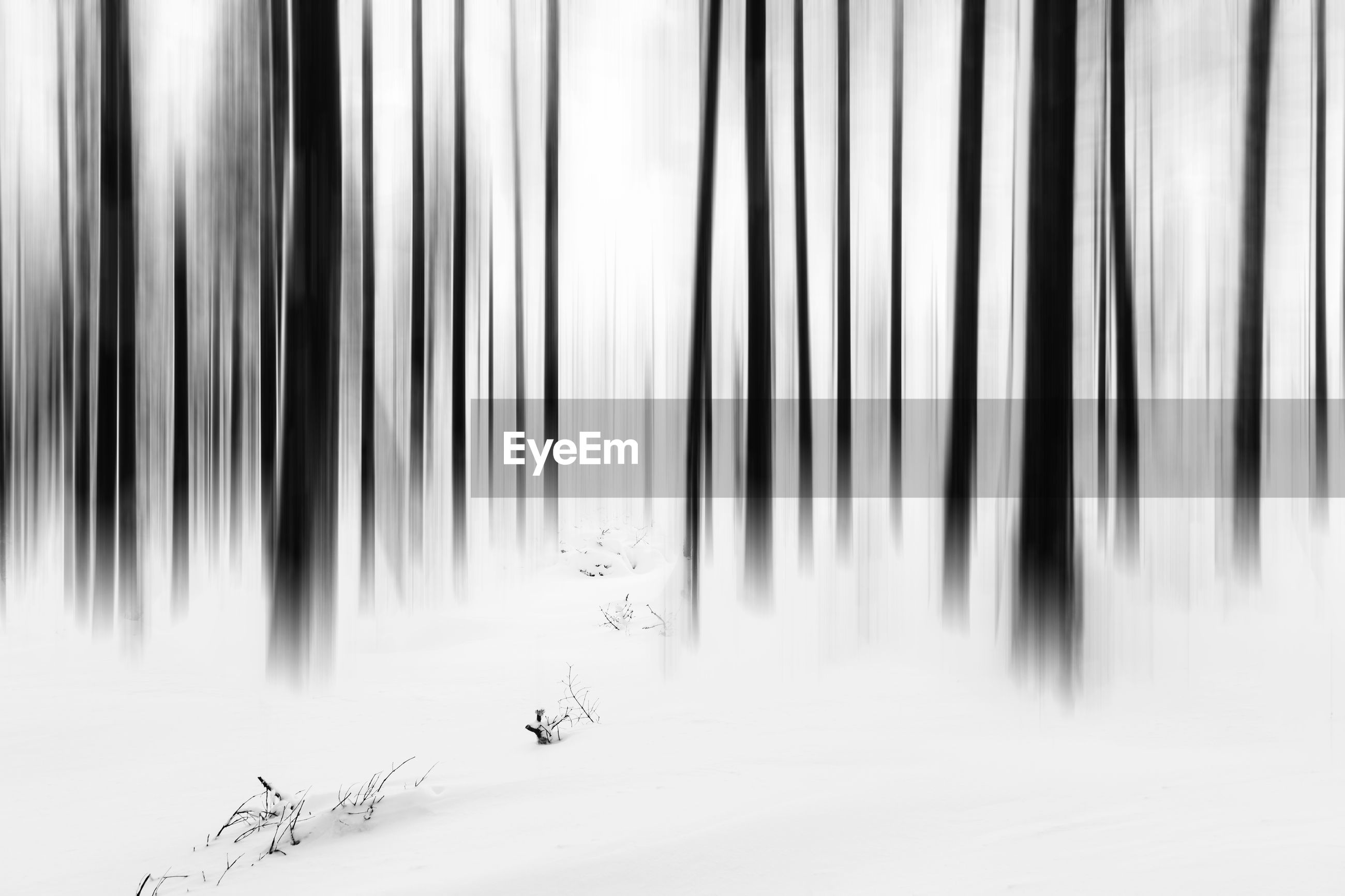SCENIC VIEW OF SNOW COVERED LAND AGAINST TREES