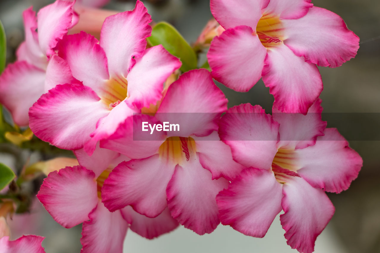 CLOSE-UP OF PINK FLOWERING PLANT OUTDOORS