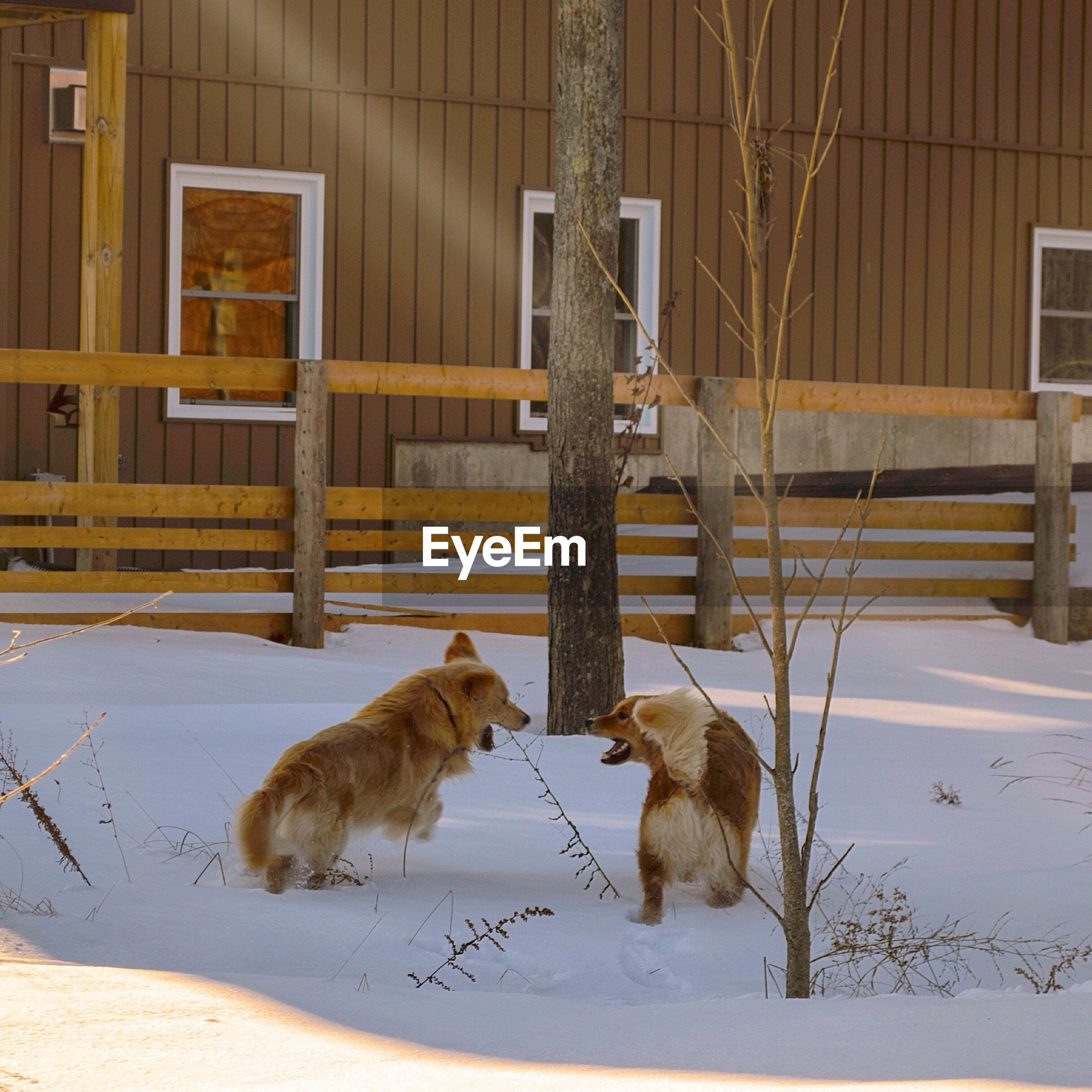 Dogs standing on snowy field
