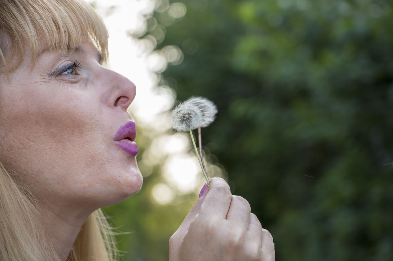 one person, blowing, real people, holding, dandelion, headshot, plant, portrait, focus on foreground, hair, blond hair, lifestyles, leisure activity, flower, dandelion seed, looking, flowering plant, women, outdoors, hairstyle, softness, human face, profile view