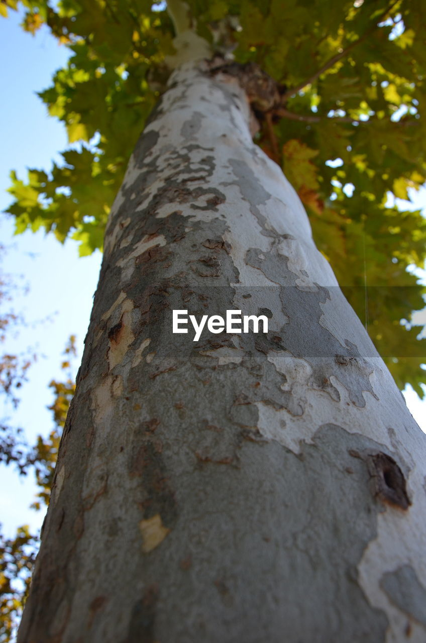tree trunk, tree, low angle view, day, outdoors, close-up, textured, focus on foreground, growth, no people, nature, branch, sky
