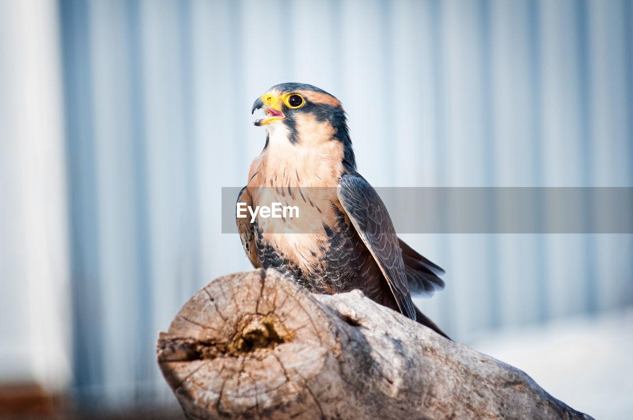 Close-Up Of Bird Perching On Tree Stump