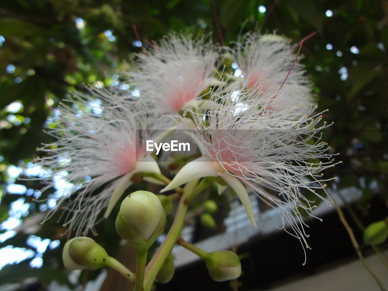 flower, fragility, growth, nature, close-up, beauty in nature, no people, focus on foreground, white color, plant, freshness, flower head, outdoors, day, tree