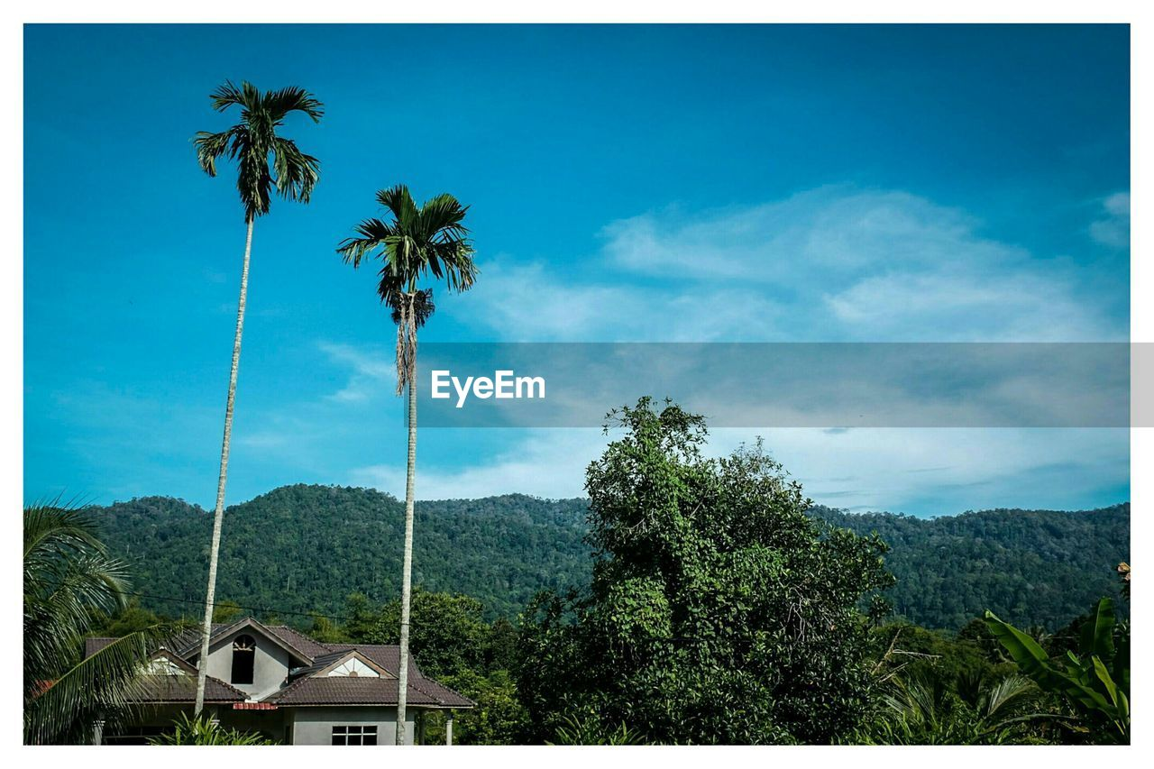 Palm trees growing by mountains against sky