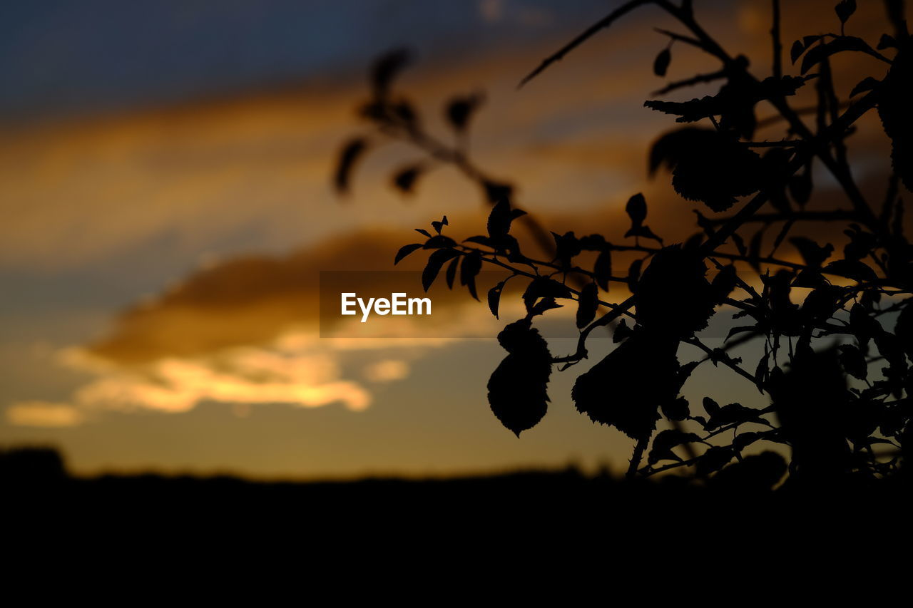 sunset, silhouette, nature, outdoors, beauty in nature, plant, no people, growth, sky, focus on foreground, scenics, tree, close-up, day