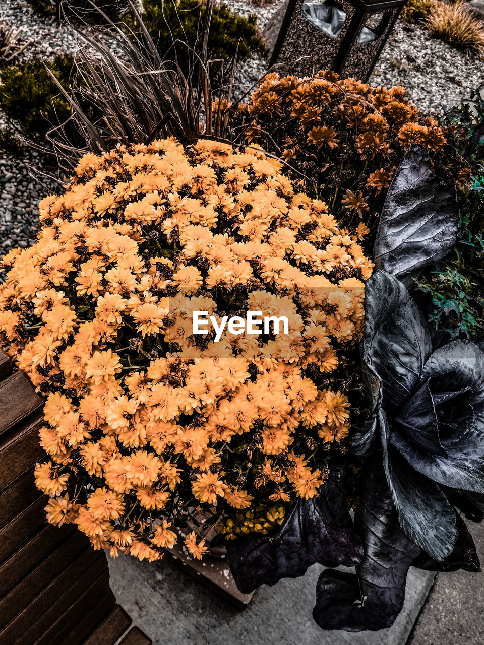 plant, day, high angle view, nature, no people, flowering plant, flower, outdoors, beauty in nature, close-up, fragility, tree, growth, vulnerability, freshness, field, land, black color, orange color, food