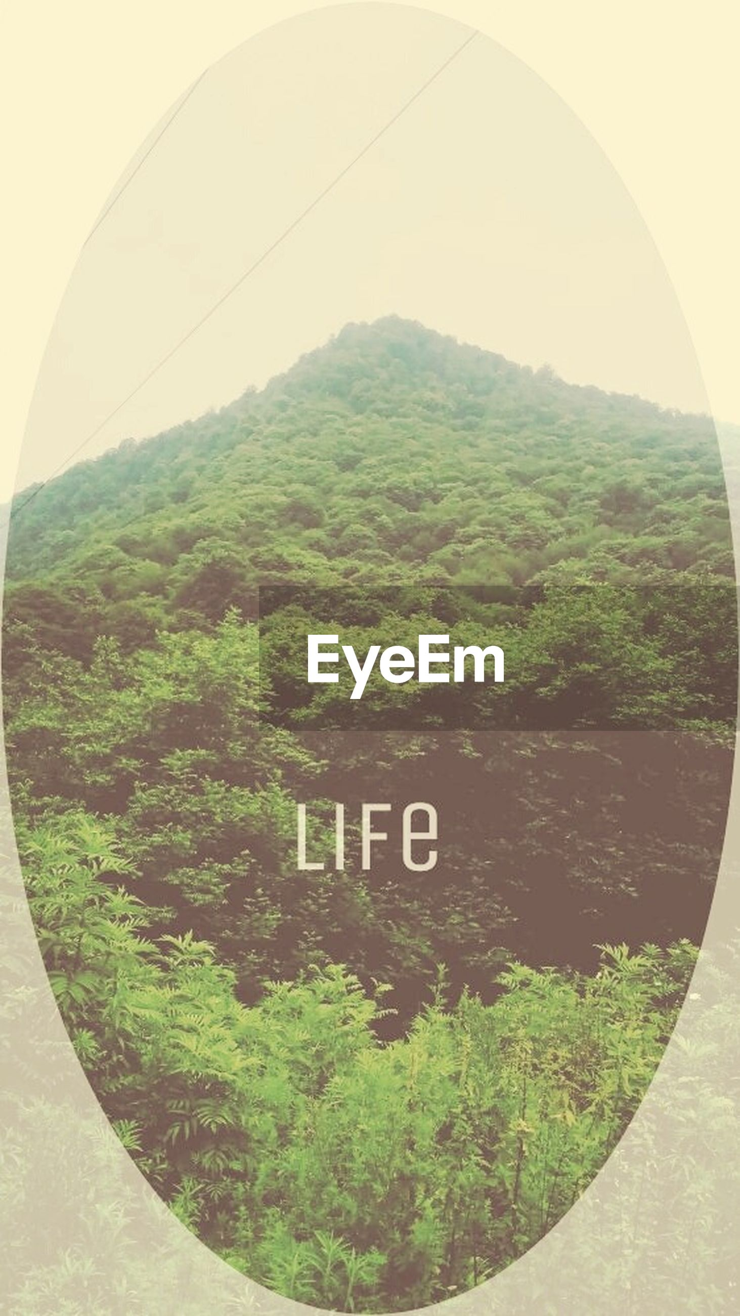 green color, tree, text, communication, mountain, circle, sky, day, landscape, growth, nature, no people, built structure, green, western script, plant, outdoors, grass, tranquility, number