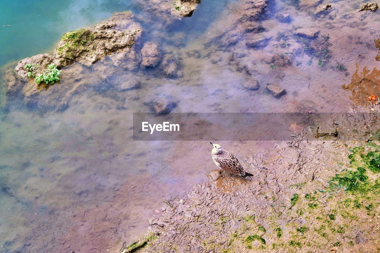 High angle view of seagull at tiber riverbank